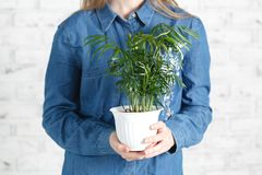 Female with green home plant in hands stock photos