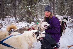 Female Guide and Her Team of Inuit Sled Dogs in Snow Winter Woods Stock Photos