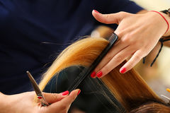 Female hairdresser hold in hand between fingers lock of blonde h Royalty Free Stock Photo