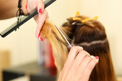 Female hairdresser hold in hand between fingers lock of blonde h Royalty Free Stock Images