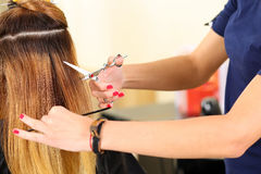 Female hairdresser hold in hand between fingers lock of blonde h Stock Image