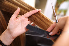 Female hairdresser hold in hand between fingers lock of hair Royalty Free Stock Photo