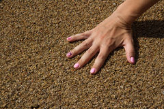 Female hand on a background sea pebbles 2 Stock Image