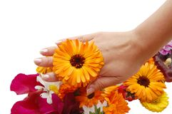 Female hand with beautiful flowers Stock Photos