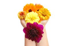 Female hand with beautiful flowers Royalty Free Stock Photos