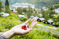 Female hand with berries Stock Images