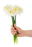 Female hand with bouquet of the white narcissuses Stock Photos