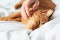 Female hand caress cat Stock Photos