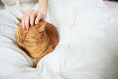 Female hand caress cat Stock Photo