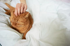 Female hand caress cat Royalty Free Stock Photography