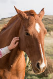 Female hand caressing horse detail Royalty Free Stock Photos