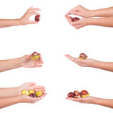 Female hand with chesnuts, isolated Royalty Free Stock Image