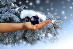 Female hand with a christmas sphere Stock Photos