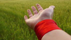 Female hand close-up with a red ribbon on the wrist, against the background of a green field of wheat, slow motion.