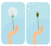 Female hand with dandelion. Stock Photos