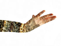 Female hand.Double Exposure. Royalty Free Stock Photos