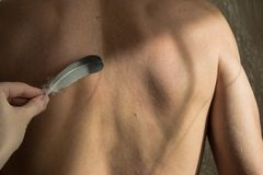 Female hand with feather petting back of a man. Image of the male back, soft male skin in natural light stock image
