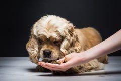 Female hand feeding a dog Stock Photos