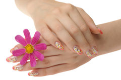 Female hand and flower Royalty Free Stock Photography
