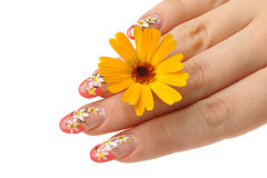 Female hand and flower Stock Photo