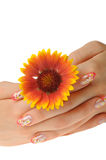 Female hand and flower Royalty Free Stock Images