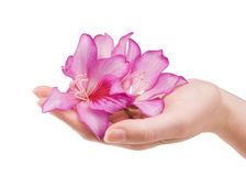 Female hand with flower Royalty Free Stock Photos