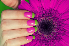 Female hand with french bi color manicure Royalty Free Stock Images