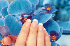Female hand with french manicure. Beautiful female hand with french manicure on blue orchid flowers royalty free stock photography