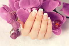 Female hand with french manicure Royalty Free Stock Image