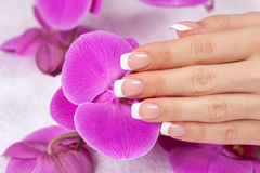 Female hand with french manicure Royalty Free Stock Images