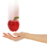 Female hand with fresh red apple Royalty Free Stock Image