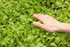 Female hand and green plant Stock Photo