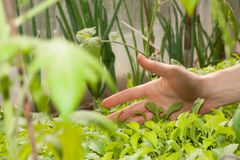 Female hand and green plant Stock Photography