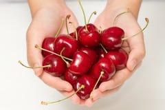 Female hand harvesting cherry Stock Photos