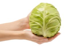 Female hand head of cabbage Stock Image