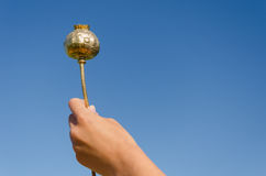 Female hand hold gold poppy on blue sky background Royalty Free Stock Image