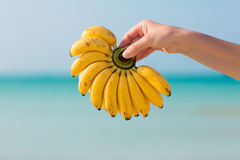 Female hand holding bananas on sea background. Female hand holding bananas on blue sea background royalty free stock photos