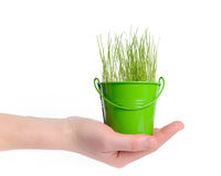 Female hand holding a bucket of grass. The bucket is green. Background is white Royalty Free Stock Image