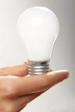 Female hand holding bulb Stock Image