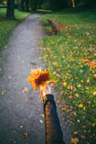 Female hand holding bunch of falling leaves Royalty Free Stock Photo
