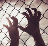 Female hand holding on chain link fence Stock Image