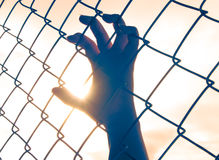 Female hand holding on chain link fence Royalty Free Stock Image
