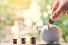 Female hand holding coins and piggy bank Stock Image