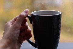 Female hand holding a Cup of hot tea. On the front of the window autumn rain Stock Photography