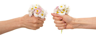 Female hand holding  daisies blossoms Stock Images