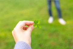 Female hand holding a four-leaf clover Royalty Free Stock Images