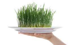 Female hand holding fresh grass in plate Stock Images