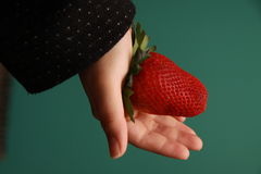 Female hand holding giant strawberry. A female hand holding a deep red giant strawberry in her palm royalty free stock image