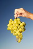 Female hand holding grape cluster Royalty Free Stock Photos