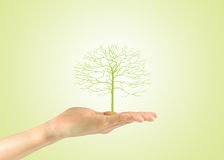 Female hand holding a green tree Royalty Free Stock Image